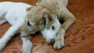 brotherly-love