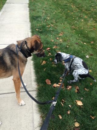 Keegan really likes walks!