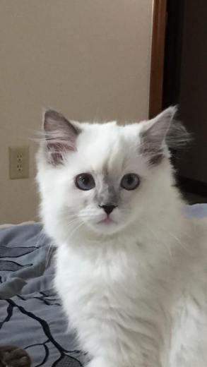 KittyLayingBack