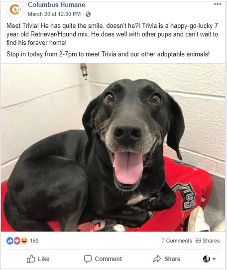 Dog up for adoption Columbus Humane