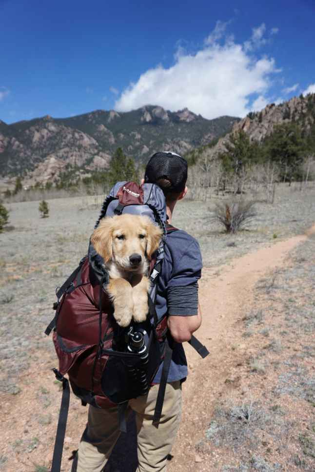 man with blue and maroon camping bag and golden retriever in backpack