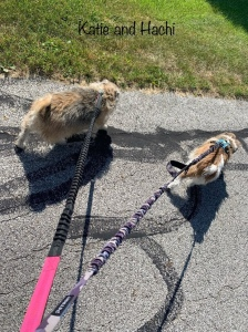 dog walker Columbus Ohio