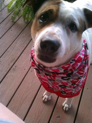 dog with bandana columbus area dog walker columbus area in home pet care 43207 43215