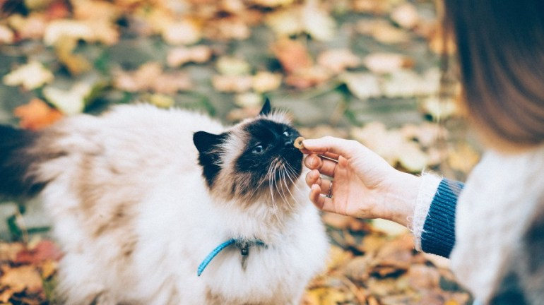 woman giving cat a treat autumn leaves columbus area dog walker columbus area in home pet care 43207 43215
